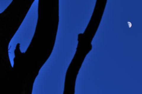 file116-1m 島影のコンポジション22 DSC_0531-2-c.jpg