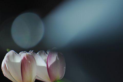 file167-1m Flower Piece  24 DSC_6417-2.jpg