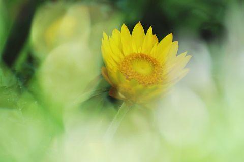 file167-2m Flower Piece  24 DSC_6333-2.jpg