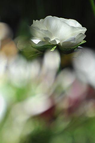 file167-3m Flower Piece  24 DSC_6337-2.jpg