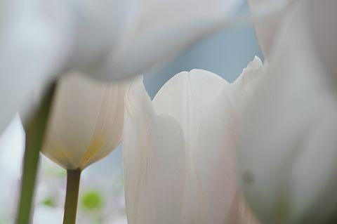 file168-3m Flower Piece 25 DSC_6639-2.jpg