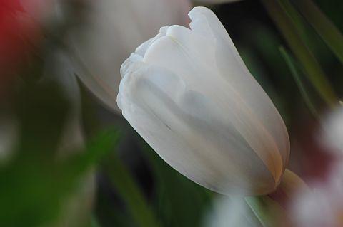 file170-2m Flower Piece 26 DSC_6644-2.jpg