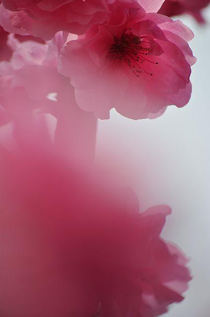 file173-1L Flower Piece 28 DSC_4499-2.jpg