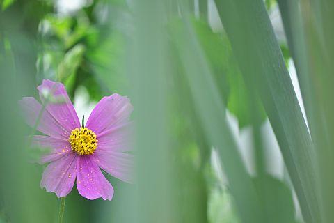 file175-2m Flower Piece  29  DSC_4506-2-c.jpg