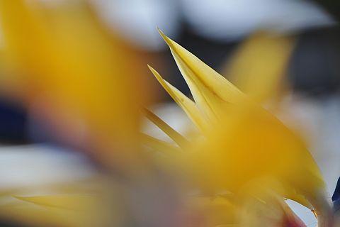 file179-2m Flower Piece  31 DSC_4410-2-c.jpg