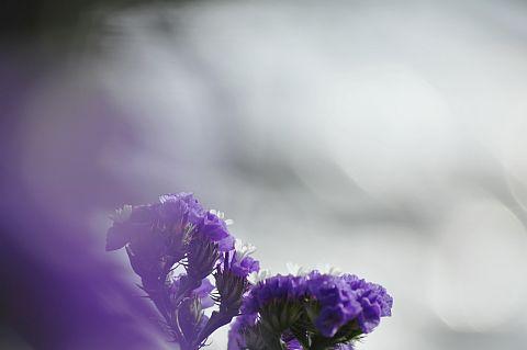 file179-3m Flower Piece  31 DSC_4474-2-c.jpg