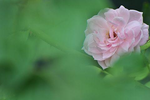 file207-2m Flower Piece 45 DSC_3226-0-c.jpg