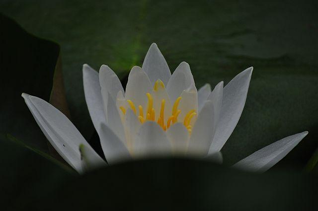 file209-1L Flower Piece 46 DSC_4784-2.jpg