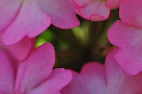 file211-3m Flower Piece 47 DSC_2413-2-c.jpg
