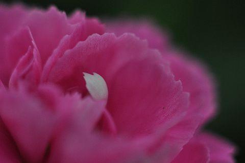 file213-2m Flower Piece 48 DSC_2357-2.jpg