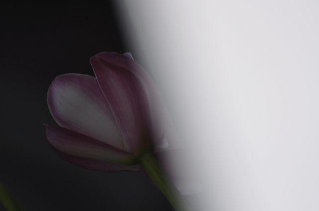 file260_1 Flower Piece 64 DSC_6457_2_c.jpg