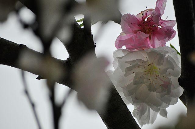 file263_1L Flower Piece 66 DSC_5057_2_c.jpg
