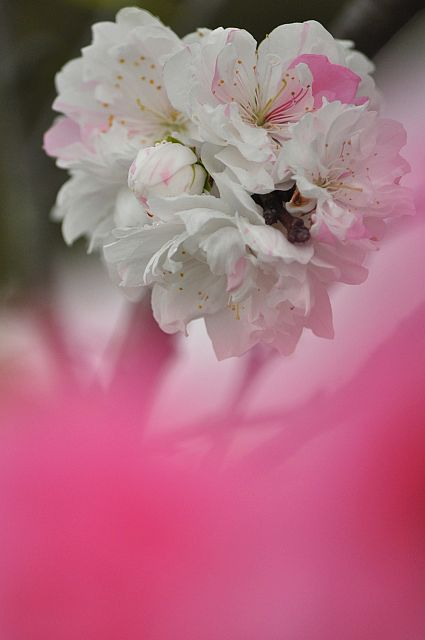 file263_2L Flower Piece 66 DSC_5058-2.jpg